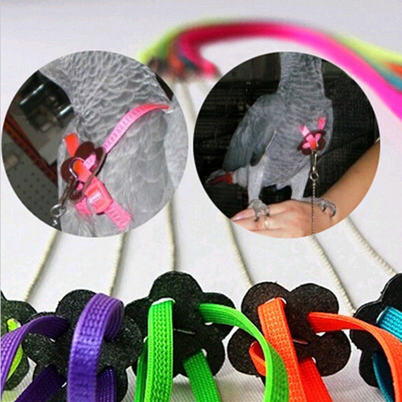 Adjustable Parrot Leash Pet Lizard Birds Harness Leash Outdoor Training Rope Belt Walking Lead Bird Leash   Color Random