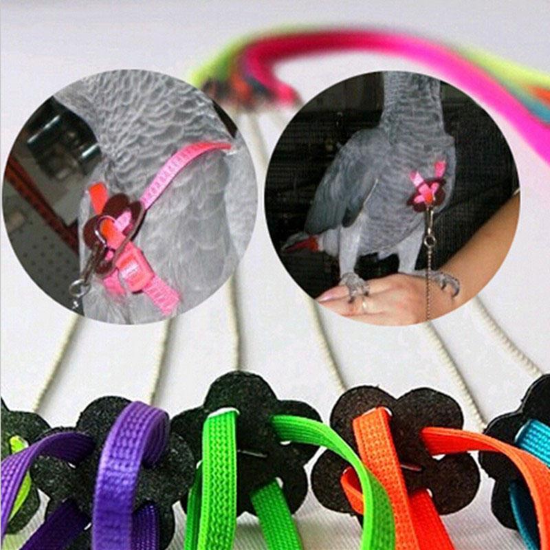 Adjustable Parrot Leash Pet Lizard Birds Harness Leash Outdoor Training Rope Belt Walking Lead Bird Leash - Color Random