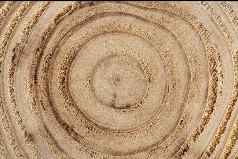 ФОТО Customized photo wallpaper 3d stereoscopic tree rings wood wallpaper PVC wallpaper self-adhesive floor wallpaper