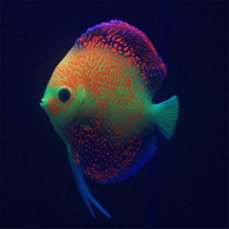 buy silicone tropical aquarium fish decor