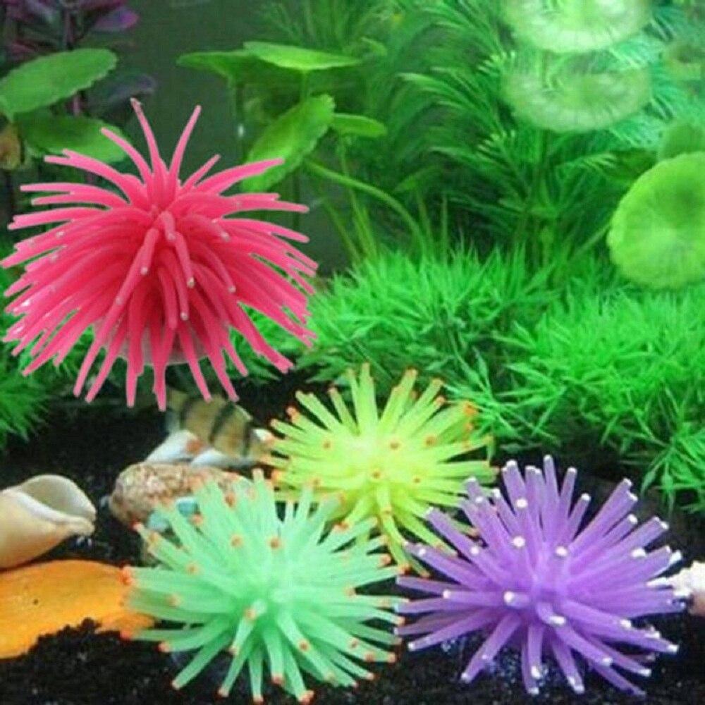 Aquarium Plants Sale Free Shipping