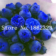 10 pcs/bag Blue Bonsai peony flower, perennial peony flowers home garden plant flower bonsai Chinese Paeonia Suffruticosa(China)