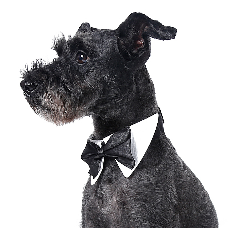 Gentleman Style Black Bow Tie For Pets Dogs Wedding