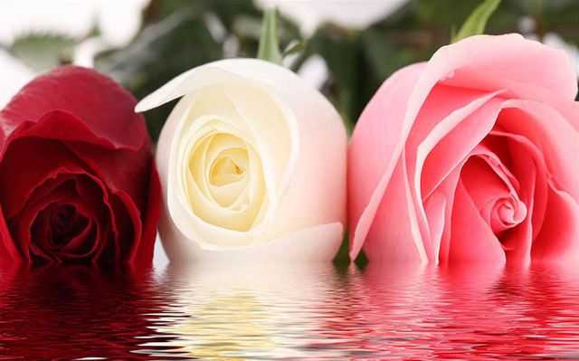 diy 5D diamond Needlework Ripples on water Red, white, pink rose ...
