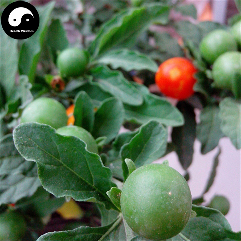 Buy Solanum Pseudocapsicum Tree Semente 60pcs Plant Ornamental Orange Fruit Bonsai