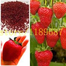strawberry seeds 500 big strawberry seeds giant and deliciouns NO-GMO rare bonsai fruit seeds for home garden planting