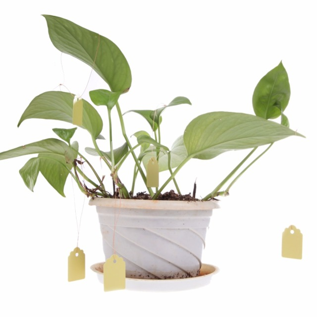 100Pcs/lot Plastic T-type Garden Plants Labels Waterproof Nursery Flower Pot Hanging Tags Marker for Garden Decoration