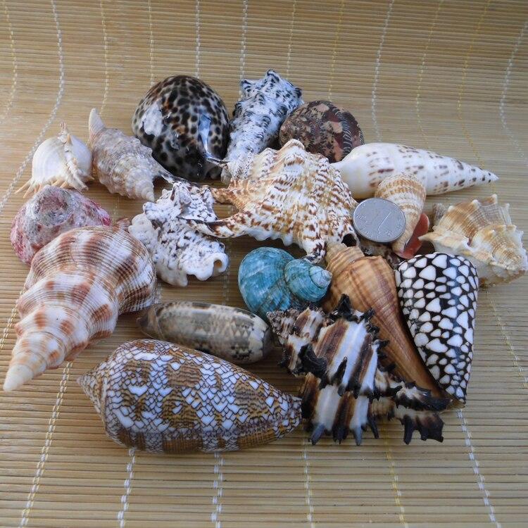 Conchas coquilles aquarium accessoires créatif plage mariage décoration zakka décor maison bricolage coquillages artisanat naturel