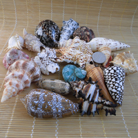 Conchas shells aquarium accessories creative beach wedding decoration zakka home decor diy sea shells natural craft