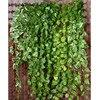 2pcs Lot 9M Artificial Ivy Leaf Garland Plants Vine Fake Foliage Green Grape Home Wedding Party