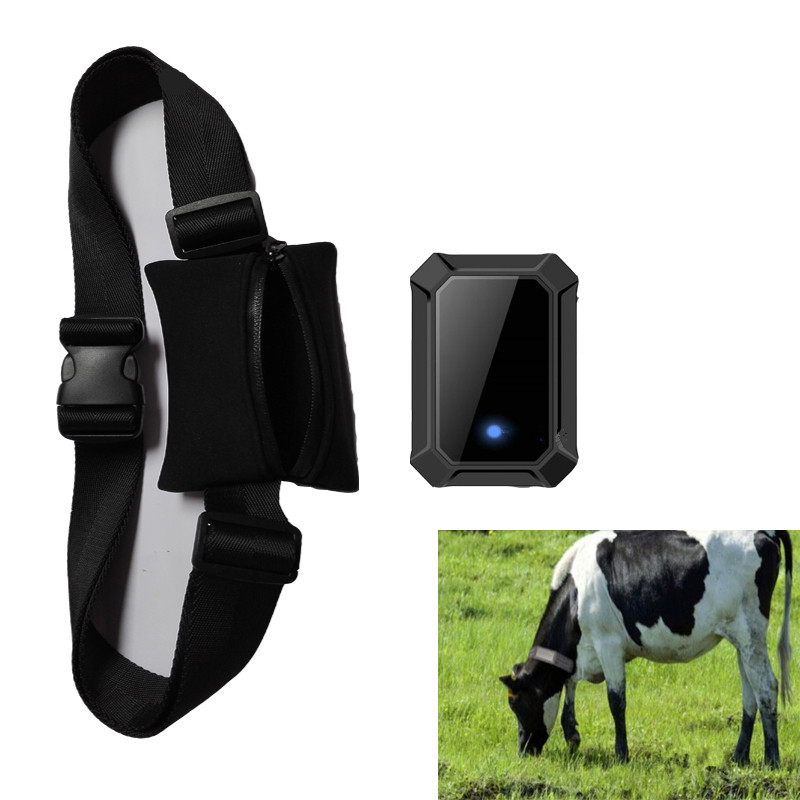GPS Tracker for Big Animal Cow Horse Waterproof Collar SIM Card 400 days Standby Pet Tracker
