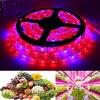 Waterproof 300LED 5M Plant Flower Grow Light Red Blue 4 1 Flexible Lamp Strip Indoor Outdoor