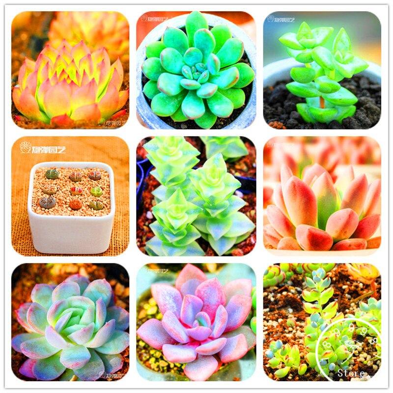 Распродажа! шт. 10 шт. 99 видов на выбор Lithops садовые суккуленты растение псевдотрункателла бонсай цветок Флорес, # AAAAA