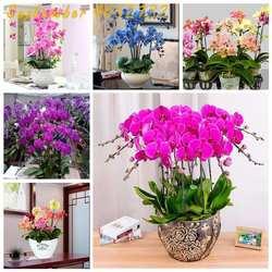Большая Акция 100 шт. фаленопсис Бонсай многолетний цветок домашний сад бонсай четыре сезона растения Орхидея карликовые деревья цветы