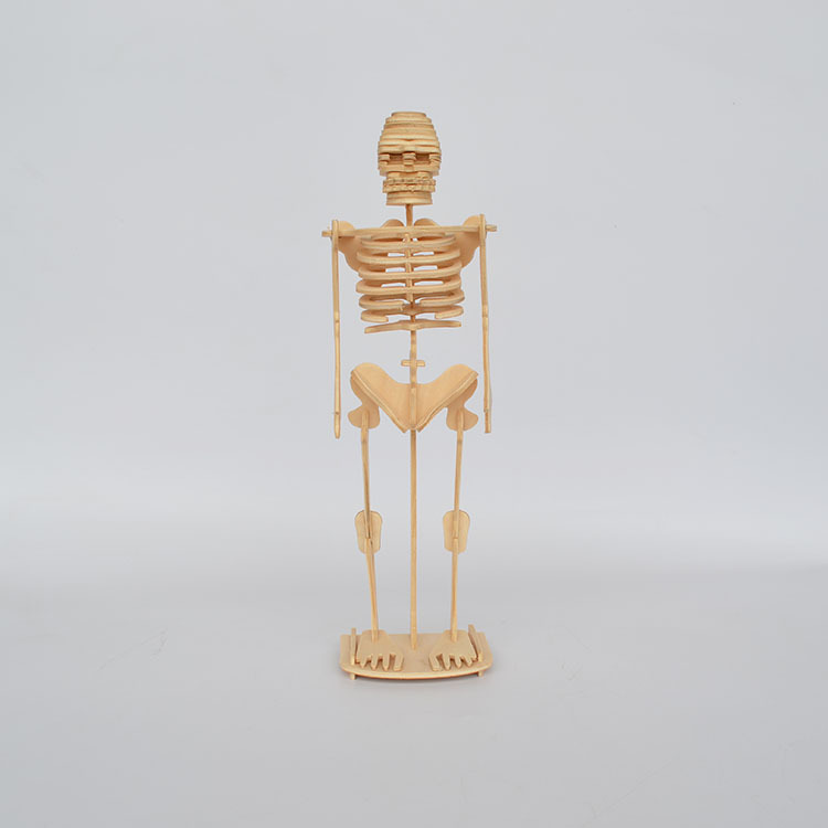 Künstliche Skeleton Holz Mannequin Spielzeug 3D Menschlichen Körper ...