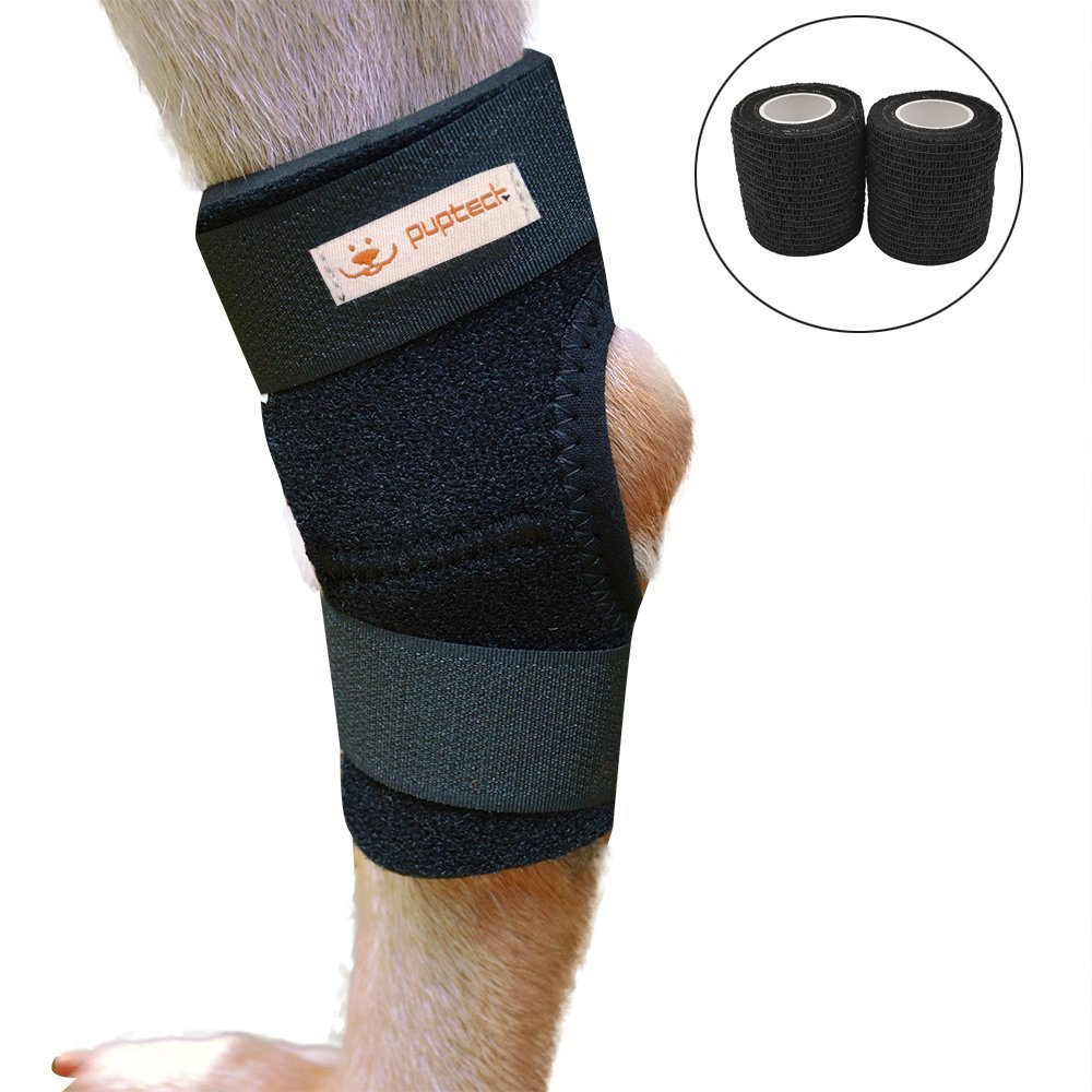 Knee Brace for Dogs Canine Rear Leg Hock Joint Protection with 2 Rolls of Bandage Wrap ...