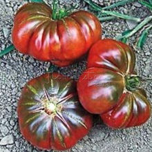 50 Purple Calabash Tomato  Seeds~Vegetable, rare variety
