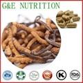 500 mg x 500 pcs Natural Cordyceps/Worm grama/Cordyceps sinensis/Chinês lagarta fungo Extrato Cápsula livre grátis