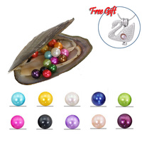 20Pcs Single Pearl Oysters Mussel Shell With 6 7MM Akoya Wish Pearl Inside, Mix 20 Colors(5 Swan Cages as Free Gift) PJW312