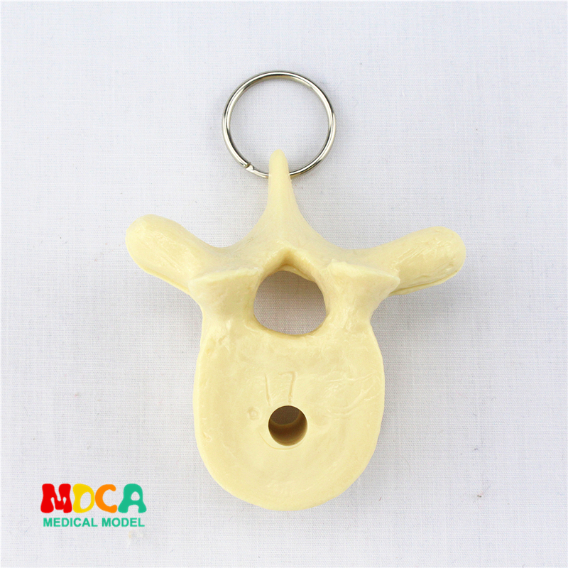 Human Spine Key Buckle Ornament Gift Pendant Key Buckle Human.organ Anatomy Medical Teaching Toy YSK017
