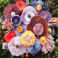 100 семена/мешок разнообразие радуга съедобные грибы, pleurotus грибных штаммов geesteranus семенных растений, бесплатная доставка