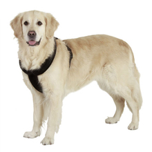 Adjustable Harness for Large Dogs