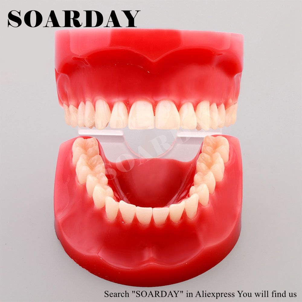 Free Shipping Natural size model study dental tooth teeth dentist dentistry anatomical anatomy model odontologia soarday children primary teeth alternating transparent model dental root clearly displayed dentist patient communication