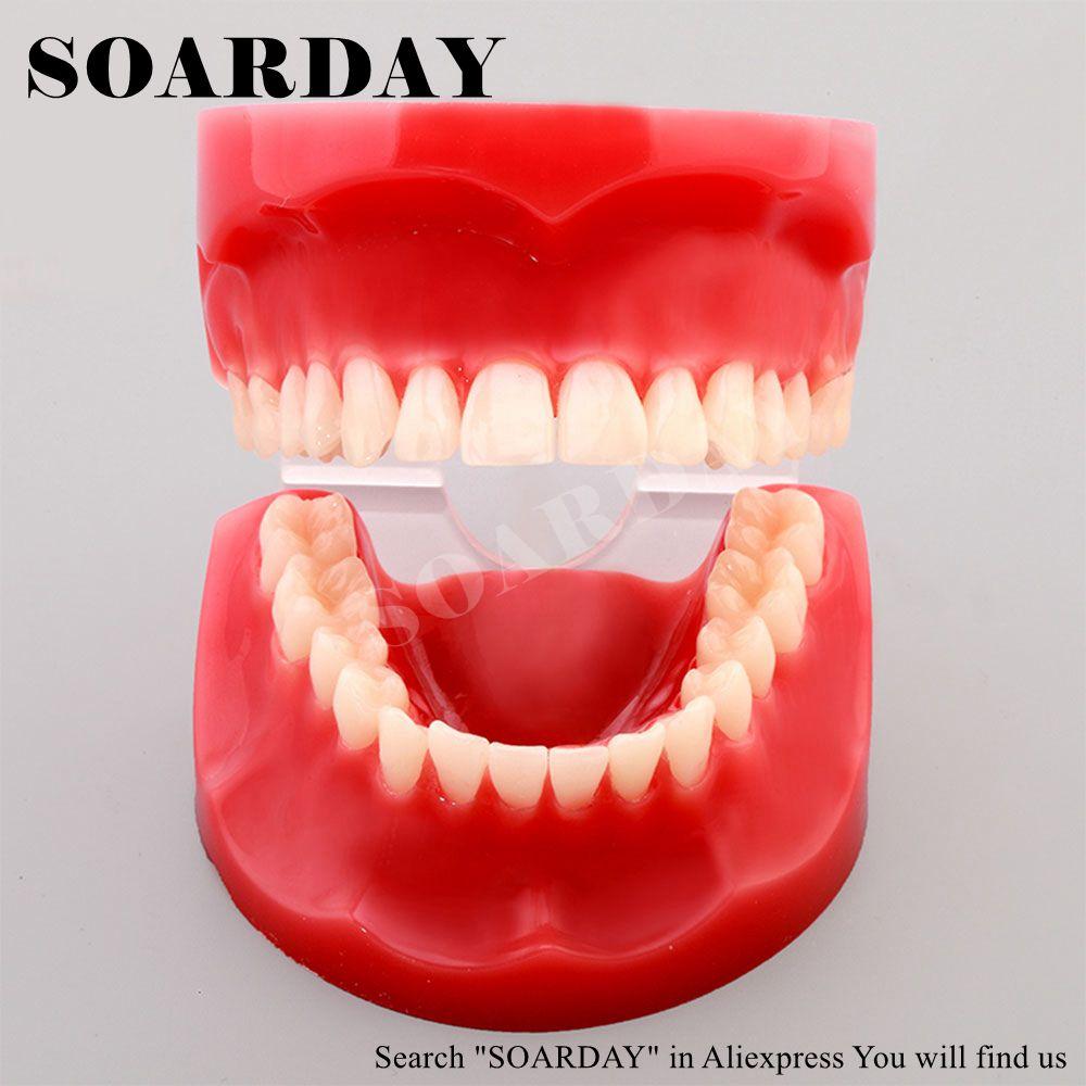 Trasporto Libero modello a grandezza Naturale di studio dentale dente denti dentista modello di anatomia anatomico odontologiaTrasporto Libero modello a grandezza Naturale di studio dentale dente denti dentista modello di anatomia anatomico odontologia