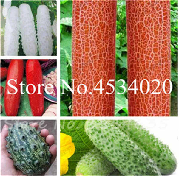 Hot Sale! 200 Buah Mentimun Bonsai Cucumis Sativus Influence Bonsai, Sayuran Hijau Bonsai Taman Perlengkapan Sayuran Non GMO Tanaman