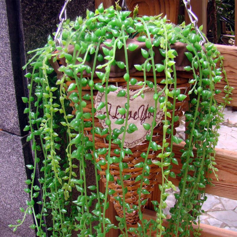 Artificial Succulent Plant Fake Hanging Vine String of Pearls Lover Tears Plants for Home Wedding Party Garden Decor 45-90cm