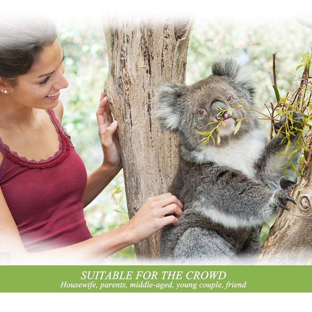 Eucalyptus Essential Oils 30ml Acne Treatment Sterilization Antiviral Water-soluble Eucalyptus Fragrance Oil Purify Air