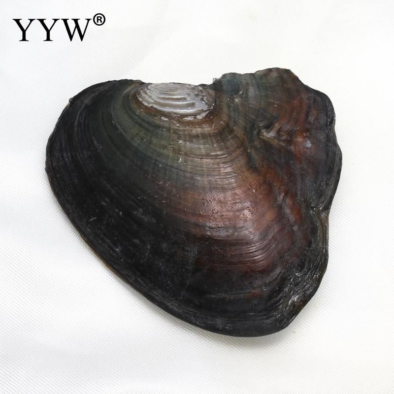 YYW Freshwater Vacuum-pack Oyster Wish color Pearl Mussel Shell with Pearl Inside Different Color Pearl Mysterious Surprise Gift