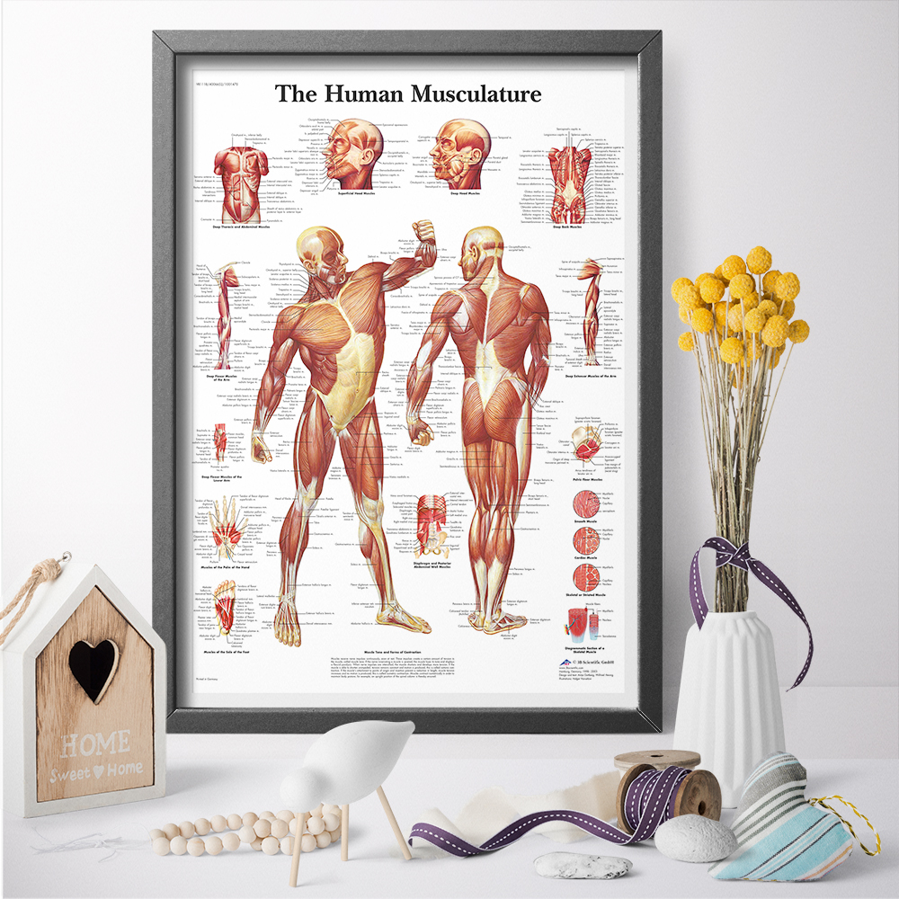 Canvas Painting Wall Art Pictures Human Anatomy Muscles System Art Poster Print Body Map Wall Pictures for Medical Education