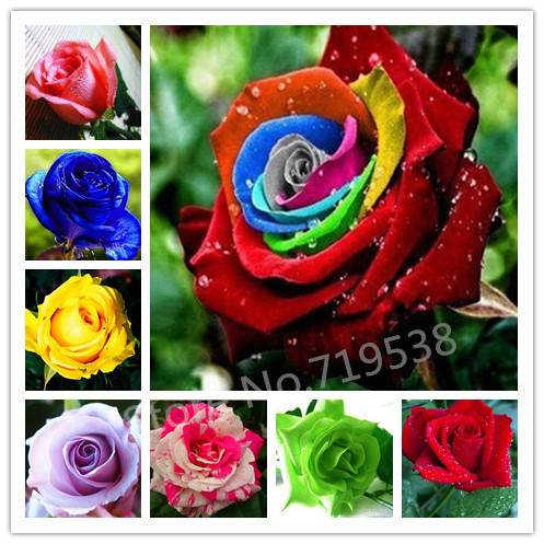 Flower pots planters , 20 Kinds Of 100 Seeds, Rainbow rose seeds Beautiful rose seed Bonsai plants Seeds for home & garden