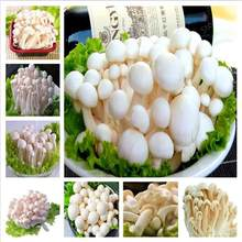1000 Pcs Delicious White Mushroom bonsai Green healthy Vegetables Bonsai plant Very Easy To Grow For Home free shipping(China)
