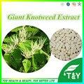 Gigante Knotweed Extrato Resveratrol Pure Saúde Natural Anti-câncer Cápsula 500 mg * 50 pcs