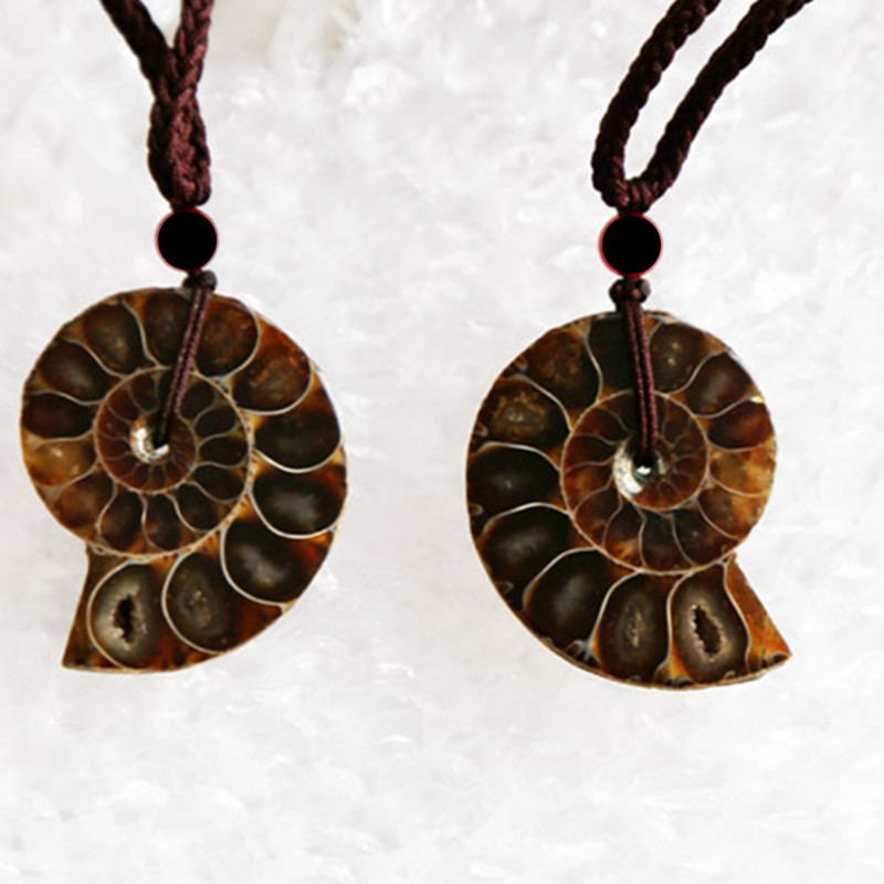 Beautiful Natural Stone Ammonite Fossils Seashell Snail Pends