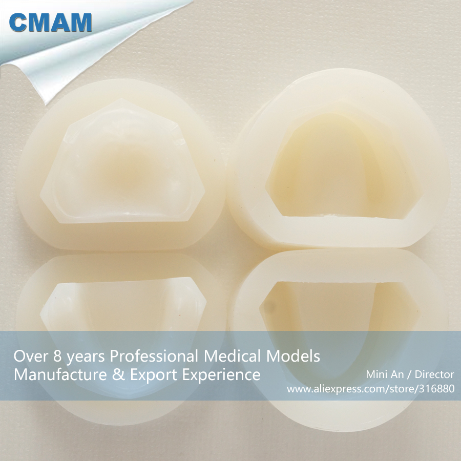 DH/13128,Rubber Mould, Bite Block Rubber Mould, Wax Embankment, Educational Teaching Anatomical ModelsDH/13128,Rubber Mould, Bite Block Rubber Mould, Wax Embankment, Educational Teaching Anatomical Models