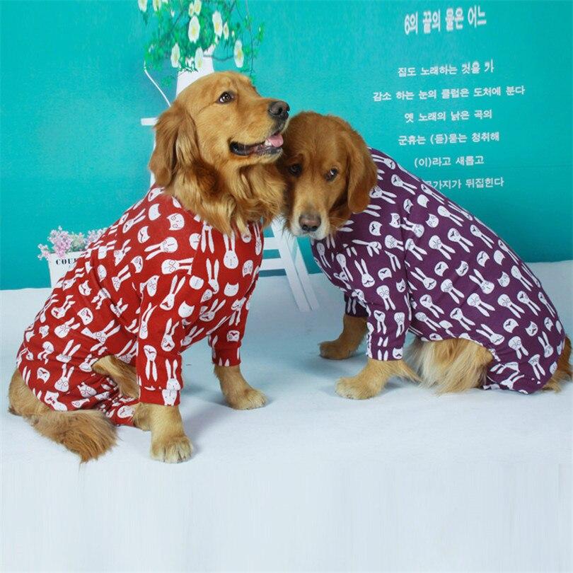 Golden retriever Dog coat (1)