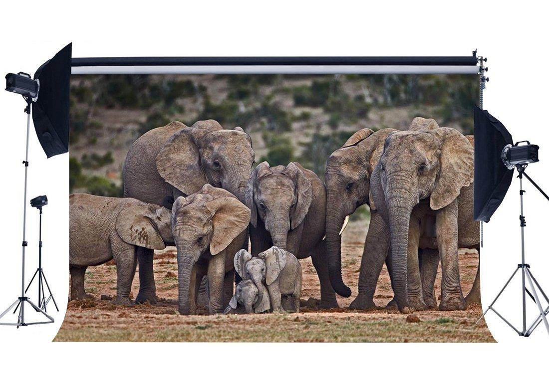 Фон с изображением слона, природы, пейзажа, джунгли-in Фон from Бытовая электроника