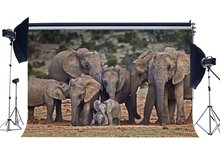 Fondo de elefante naturaleza paisaje selva bosque fondos Feliz Día de la madre dulce amor fondo