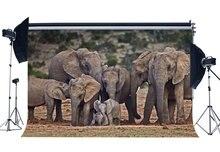 Toile de fond éléphant Nature paysage Jungle forêt décors heureux fête des mères doux amour fond