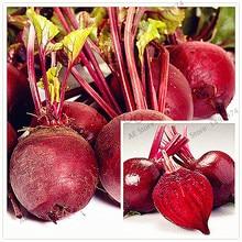 Здесь можно купить  100pcs/bag Mixed Beetroot Seeds, Beta vulgaris Vegetable Seeds,Bulk Beet Seeds Non-Gmo Heirloom for bonsai home garden  Garden Supplies