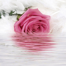 3D Wallpaper Romantic Rose