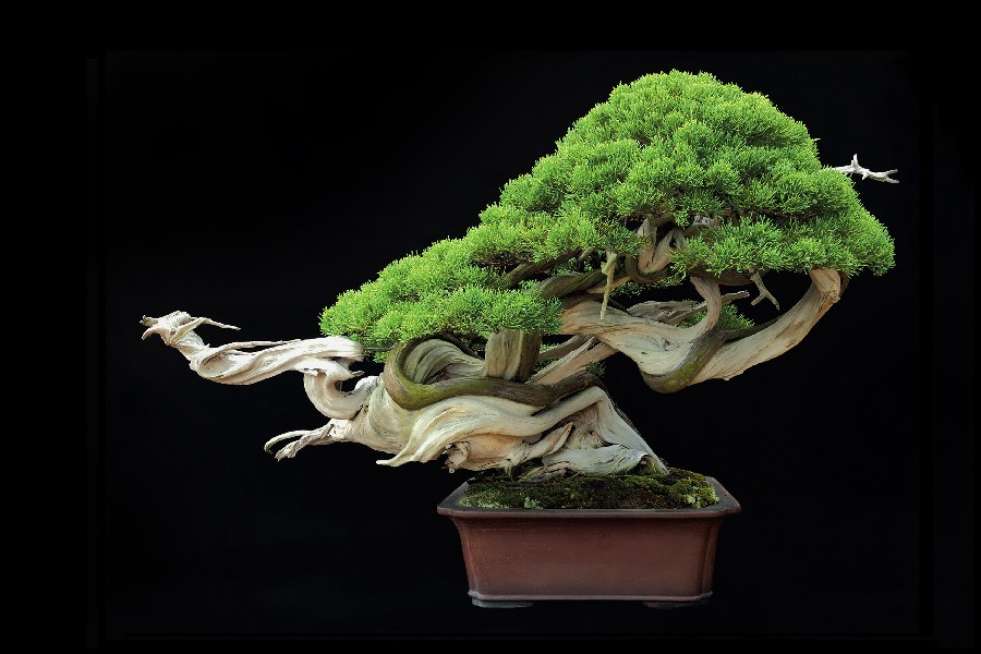 Bonsai Tree Art Promotion-Shop for Promotional Bonsai Tree Art on ...