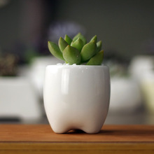 Купить с кэшбэком 5.5x5.5x6cm Simple white meat more creative cute mini ceramic pot pots shaped teeth freeshipping