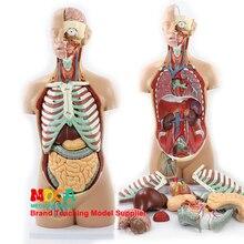 85 cm demontage van 17 delen van aseksuele menselijk kofferbak viscerale anatomisch model MQG201 voor onderwijs lever, darm en maag