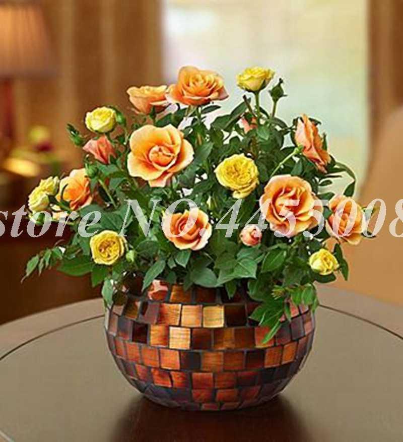 بيع 100 قطع روز بونساي المعمرة روز الزهور داخلي بونساي زهرة روز شجرة عبق تسلق النباتات للمنزل حديقة زراعة