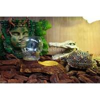 Creatieve Reptiel Terrarium Worm Water Dish Feeder Schildpad Spiders Voerbak