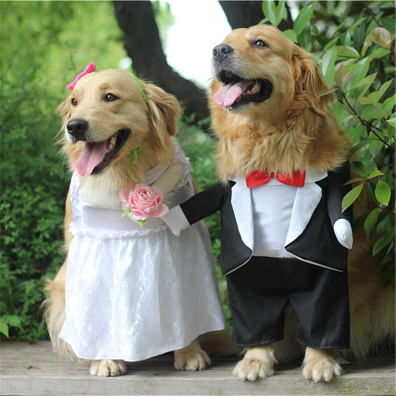 Dog Costume For Wedding Party (1)